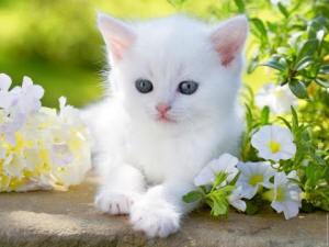 Понос белый у кота