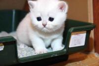 Что если у маленького котенка понос