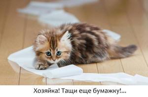 у котенка в возрасте 1 2 3 4 5 6 7  месяцев понос, что делать в домашних условиях? Чем кормить, как лечить?