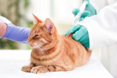 Применение антибиотиков при почечной недостаточности у собак и кошек