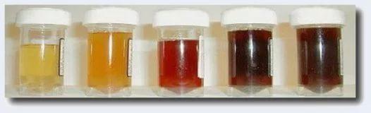 Пироплазмоз у собак, симптомы, лечение, диагностика, профилактика бабезиоза